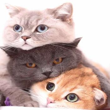 5 MUST-KNOW Multi-Cat Household Tips for Keeping the Peace -  5 MUST-KNOW Multi-Cat Household Tips