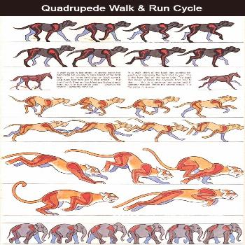 As I try to hand draw a walk cycle, this is a good reference. As I try to hand draw a walk cycle, t