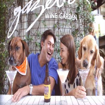 Bars March Celebrates 10 Years Supporting Animal Welfare   Australian Dog Lover